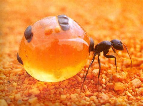 pancakes cuisine az pin nourriture images de miel nids d abeilles fonds d