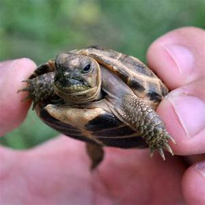 49 best images about Tortoises on Pinterest | Chain links ...