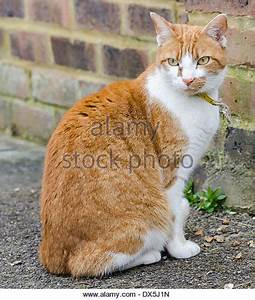 Domestic Cat Outside Stock Photos & Domestic Cat Outside ...