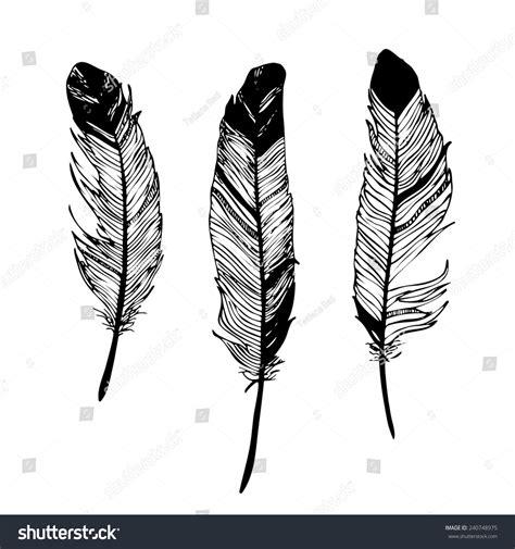 drawn feather black  white pencil   color drawn