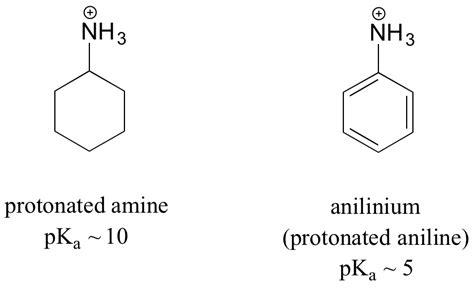 Protonated Amine by 7 5 Acid Base Properties Of Nitrogen Containing