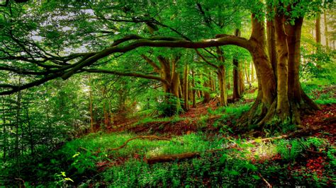 Tree In Woods Wallpaper by Landscape Trees New Forest Background Trees Tree Hd Nature
