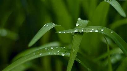 4k Grass Wallpapers Macro Nature Windows Wet