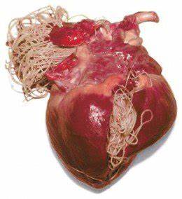 Is Heartworm Testing Really Necessary