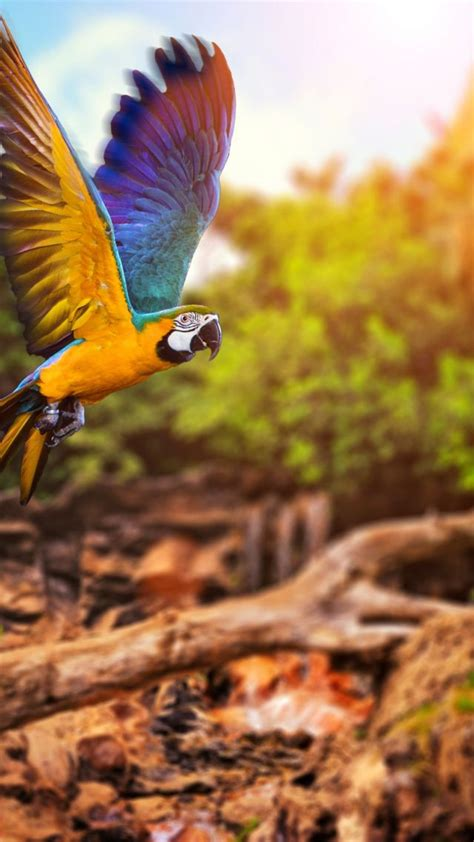 wallpaper flying parrot yellow blue animals