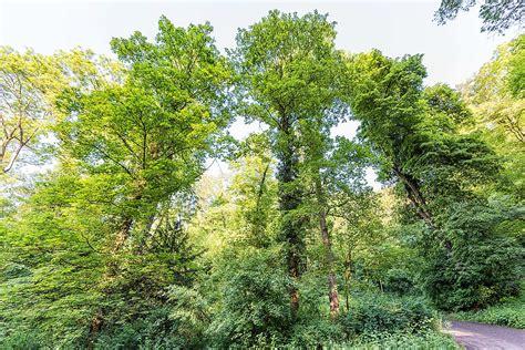 Botanischer Garten Berlin Arboretum by Botanischer Garten Botanische G 228 Rten Arzneig 228 Rten