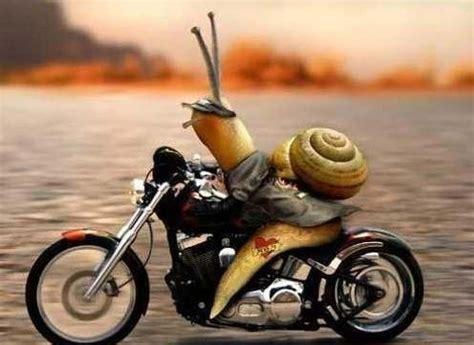 cuisines limoges images un escargot motard images drôles photos divers sur