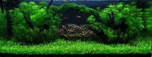 Moos Für Aquarium : unterwasser landschaft moosbr cke f r 60 liter aquarium wasserflora s ~ Frokenaadalensverden.com Haus und Dekorationen