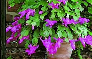 Plantes à Suspendre : fiche de culture les plantes d 39 int rieur ~ Premium-room.com Idées de Décoration