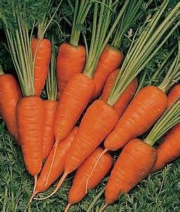 Short 'n Sweet Carrot Seeds and Plants, Vegetable ...  Carrot