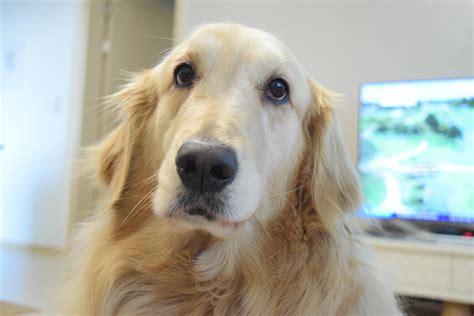 post  reddit  dog sarang  south