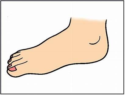 Feet Foot Clip Clipart Parts Cartoon Cliparts