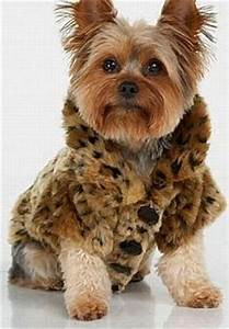 807 best images about pet stuffs on pinterest With expensive dog accessories