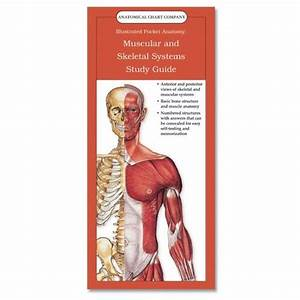 Ebook  Pdf U22d9 Anatomical Chart Company U0026 39 S Illustrated Pocket