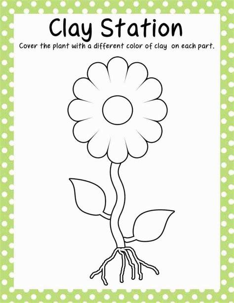 plant activities for kindergarten worksheets for all