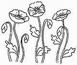 Maci Planse Coloring Colorat Flowers Desenat Interferente Stitch Cross Embroidery Vonalrajz Pipacs Colorful sketch template