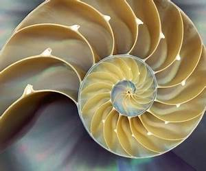 Automating Change With Help From Fibonacci | The ...