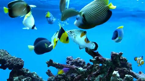 fish doctor page      tropical fish
