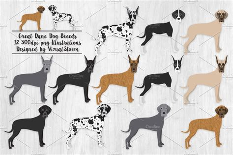 great dane dog breed illustrations illustrations