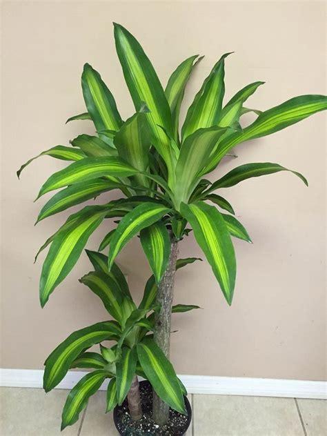 florida tropicultureinc plantantcom