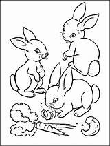 Rabbit Coloring Bunnies Eating Pages Carrot Rabbits Three Drawing Velveteen Funny Children Printable Carrots Animals Colorings Getcolorings Getdrawings sketch template