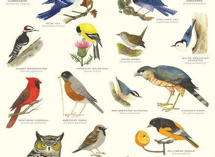 types of backyard birds outdoor goods