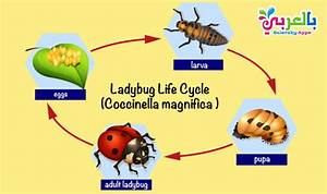 Plant Life Cycle Diagram For Kids