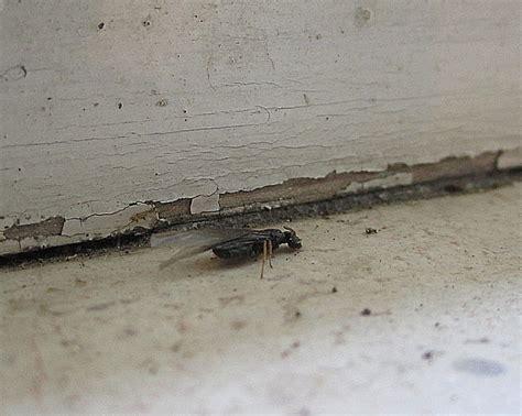 Ameisenbekämpfung Wichtiges über Die Bekämpfung Von Ameisen