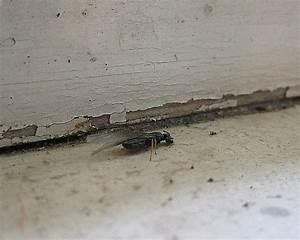 Ameisen Im Haus Woher : was hilft bei ameisen elegantes ameisen im haus was tun ~ Lizthompson.info Haus und Dekorationen