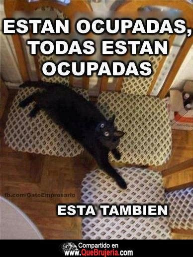 Memes Chingones - gati horoscopos rescate animal