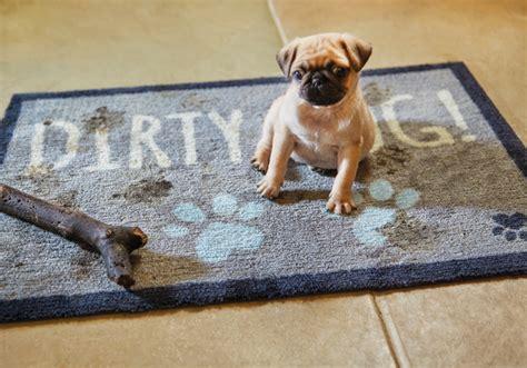 tappeti per cani tappeti per cani e gatti con tecnologia igiene attiva