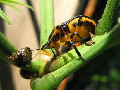 Beetle Wallpapers 2915 2186 Hdwallpaper Nu