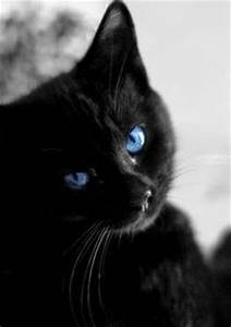 1000+ images about Blue Eyed Black Cats on Pinterest ...