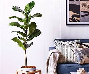Top, 10, Indoor, Plants, To, Choose, For, A, Busy, Household