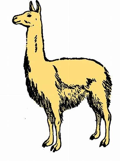 Llama Clipart Clip Cartoon Lama Cliparts Alpaca