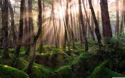 Forest Pine Sunrise 4k Desktop Background Wallpapers