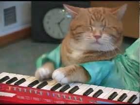 keyboard cat keyboard cat reincarnated