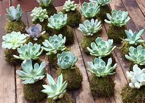 Kokedama Selber Machen : unique kokedama suculentas ball ideas for hanging garden plants selber machen ideas plant ~ Orissabook.com Haus und Dekorationen