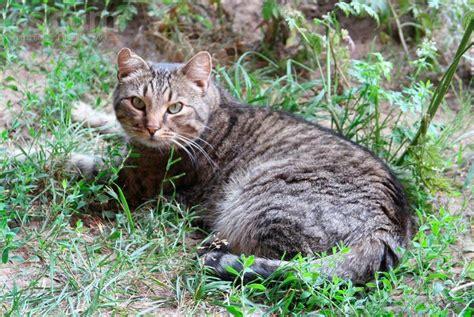PP.lv Dzīvnieki Kaķi, kaķēni: Meklē mājas Šis mīlīgais ...