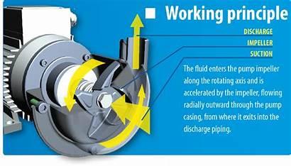 Centrifugal Pumps Pump Principle Working Tapflo Components
