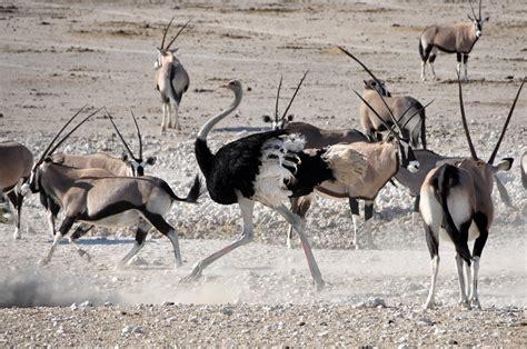 perfect time   safari acacia blog