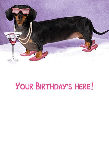 birthday cards dachshund funny cards  postage included