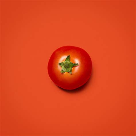 welche erde für tomaten optimale erde f 252 r tomaten welche erde f r tomaten mein