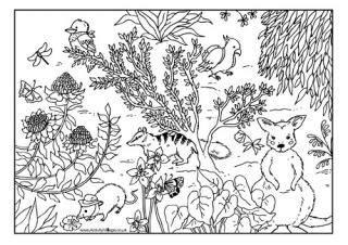 australian animal colouring pages kids love australian