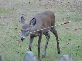 Bow Hunting Tree Stands by Nj Deer Shot In Head With Arrow Photos Rescued And Saved