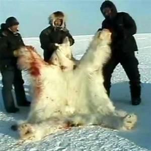 Protect Polar Bears · Causes