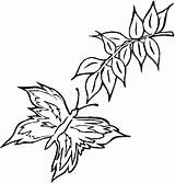 Twig Pages Colouring Template Coloring Animals sketch template
