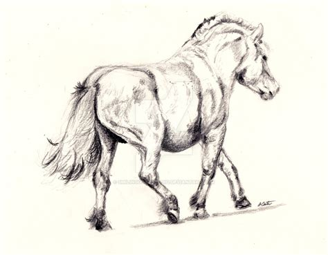 Fjord Drawing by Fjord Horse Sketch By Smilinggoatstudio On Deviantart