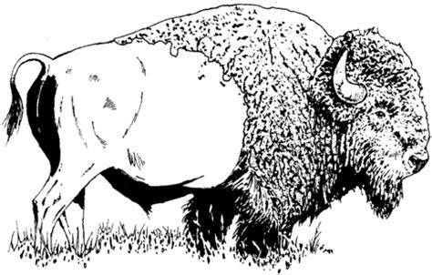 bison american buffalo coloring page supercoloringcom