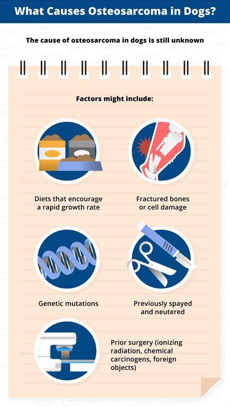 bone cancer osteosarcoma  dogs canna pet